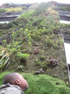 Découverte des murs végétalisés du quai Branly