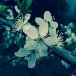Le printemps dans notre jardin